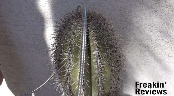 metal garden hose on a cactus