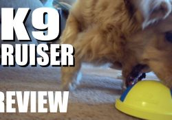 k9 cruiser review
